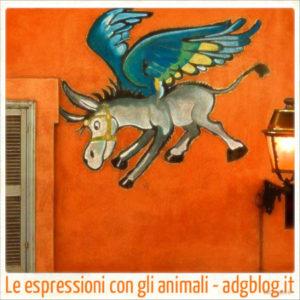 Espressioni con gli animali