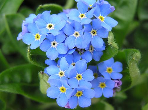Litaliano con i fiori e i pronomi relativi  Adgblog