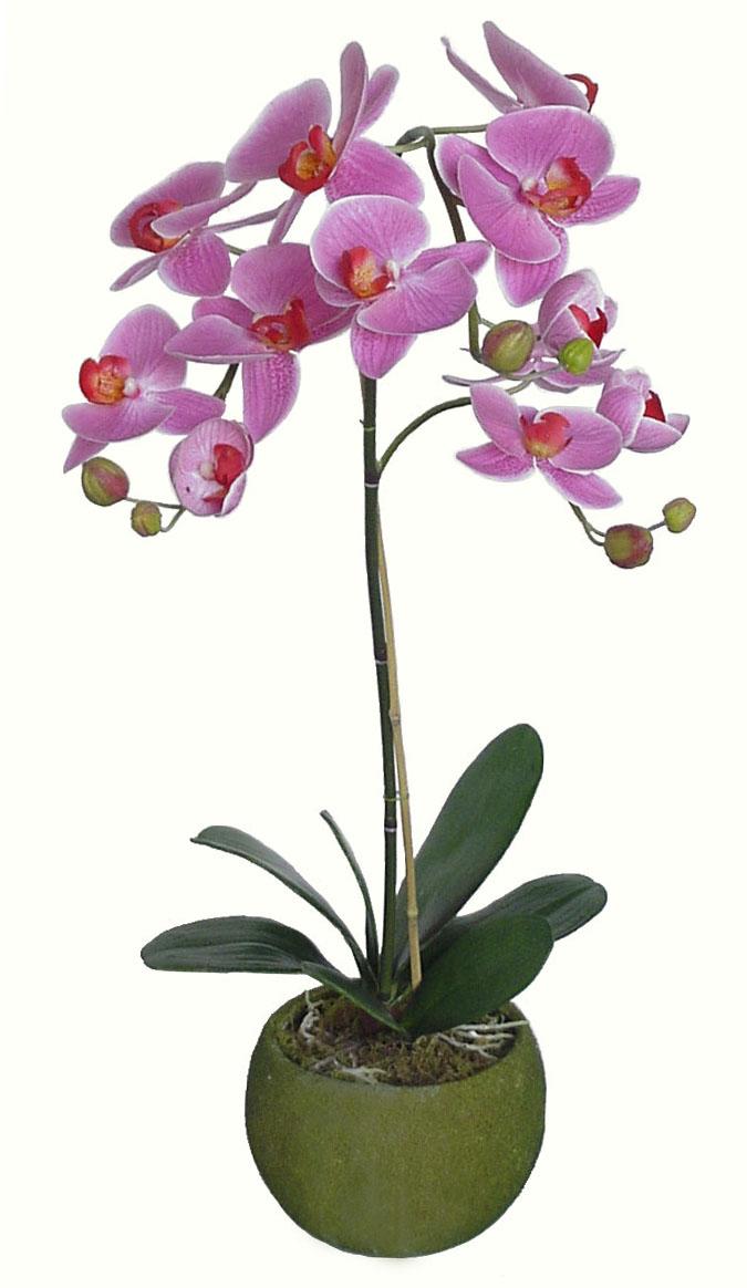 L 39 italiano con i fiori e i pronomi relativi adgblog for Orchidea pianta