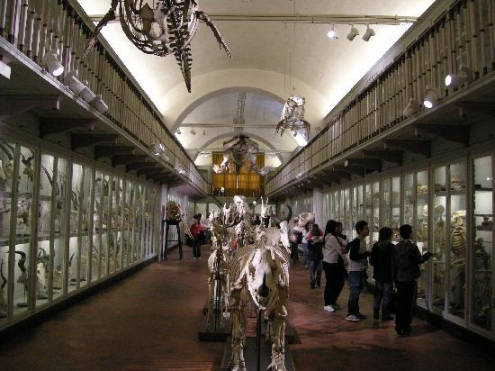 Il salone degli scheletri al Museo della Specola