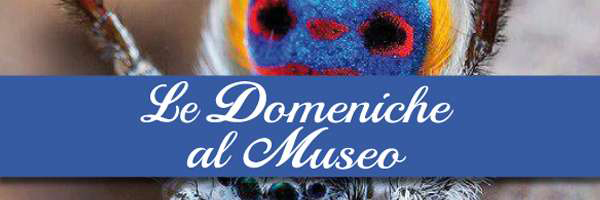 dom_museo