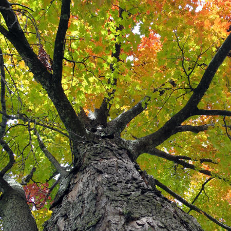 autunno450