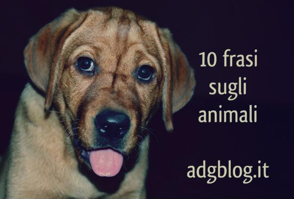 10 Frasi Sugli Animali Italianol2ls Adgblog