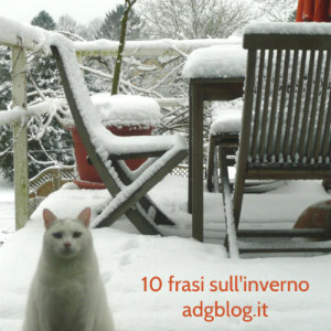 gatto inverno