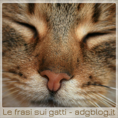 frasi italiane sui gatti