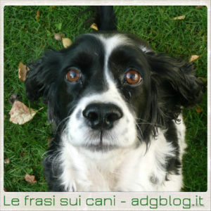 Le frasi sui cani
